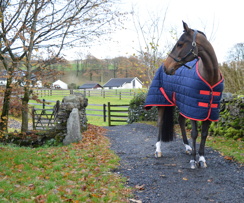 Introducing The Yaris Equestrian Core Range